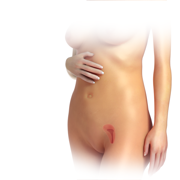 Breasts during first trimester pregnancy
